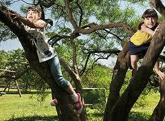 http://www.docelimao.com.br/images/ARVORE.jpg