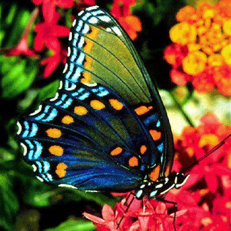 http://www.docelimao.com.br/images/BORBOLETA.jpg