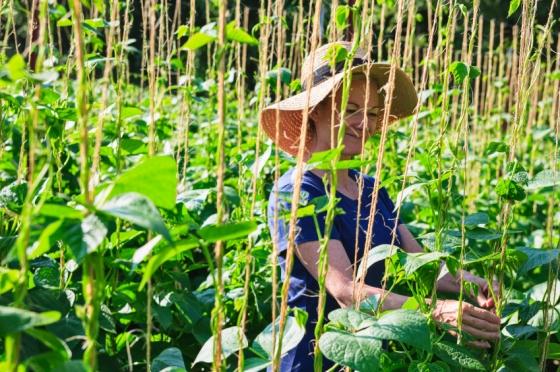 http://www.docelimao.com.br/images/FAO-agricultura-familiar.jpg