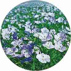 http://www.docelimao.com.br/images/Flores.jpg