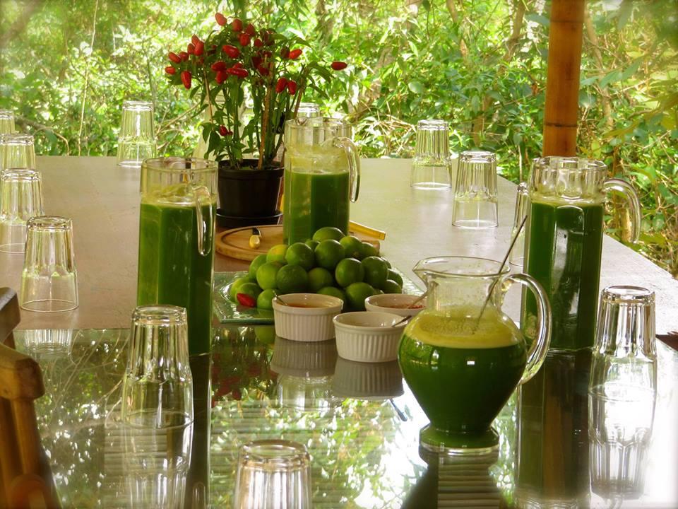 http://www.docelimao.com.br/images/SUCO-KASHI.jpg