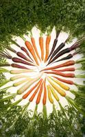 http://www.docelimao.com.br/images/circulo-de-vegetais.jpg