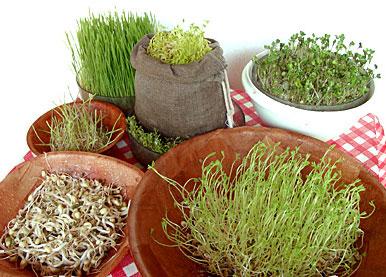 http://www.docelimao.com.br/images/germinados.jpg