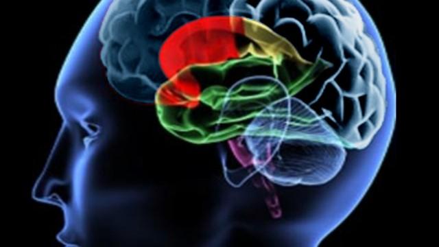 O Segundo Cérebro