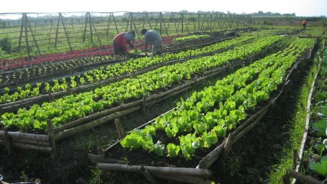 Curso horta organica