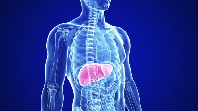 What does the liver represent?