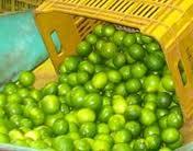 Safra do Limão Tahiti