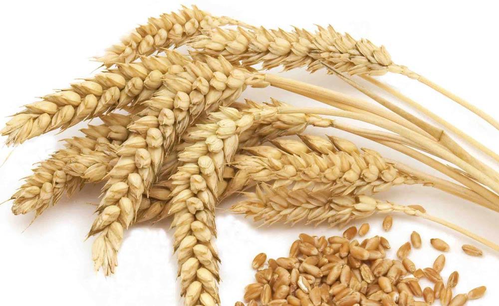 Dibujo Del Grano De Trigo: Você Sabe Comprar Cereais E As Leguminosas? Semi-Deusas